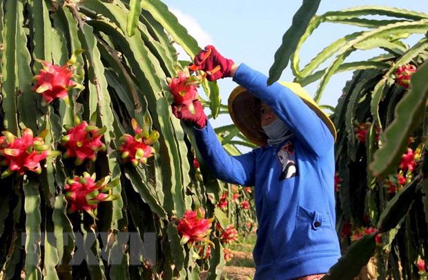 Hiệp định thương mại tự do Việt Nam-EU: Doanh nghiệp kỳ vọng bứt phá - Ảnh 1.