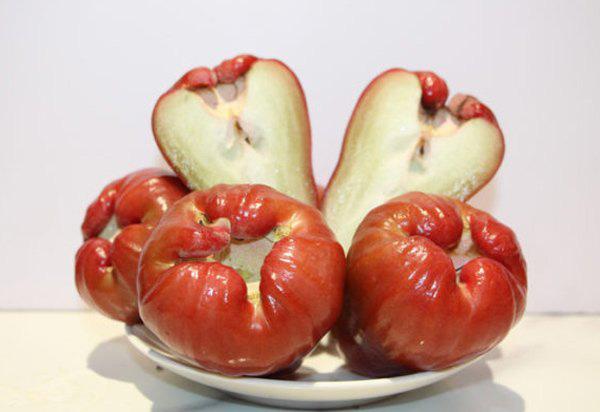 Nguồn dinh dưỡng dồi dào cùng những lợi ích tuyệt vời của quả roi - Ảnh 3.