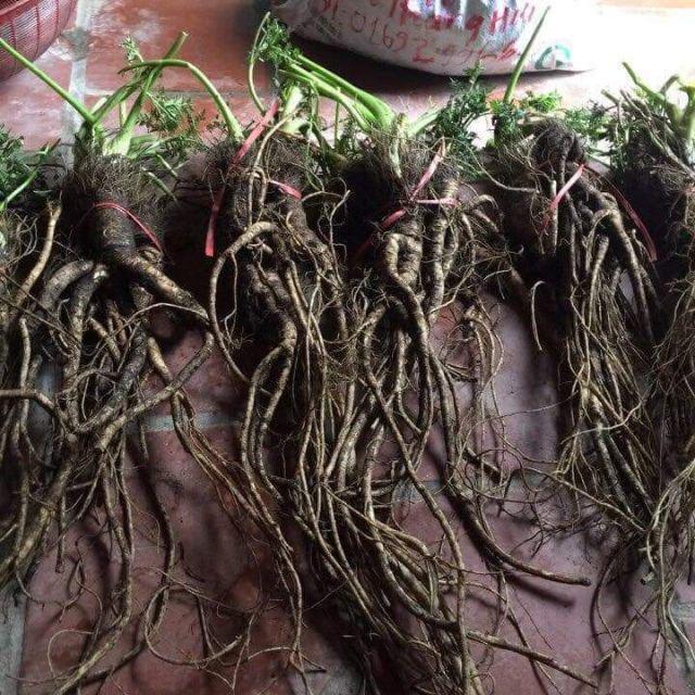 12 tác dụng bồi bổ và tăng cường sức khoẻ của củ sâm đất - Ảnh 4.