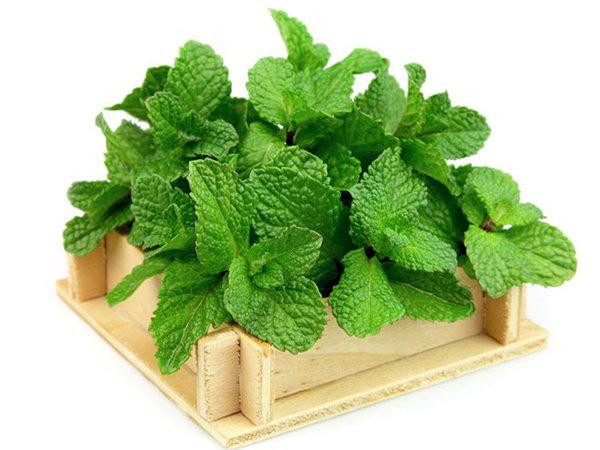Lưu ngay loạt thực phẩm giúp cơ thể luôn tỏa hương thơm chẳng thua khi dùng nước hoa - Ảnh 3.