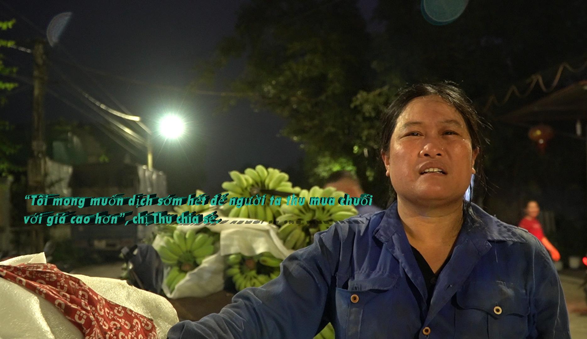 """Hứng chịu """"thảm họa kép"""", người trồng chuối Hưng Yên đau quặn lòng: """"Thương lắm, chuối ơi!"""" - Ảnh 12."""