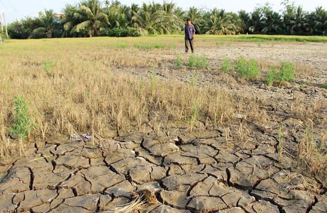 Hạn mặn xâm nhập đồng bằng sông Cửu Long