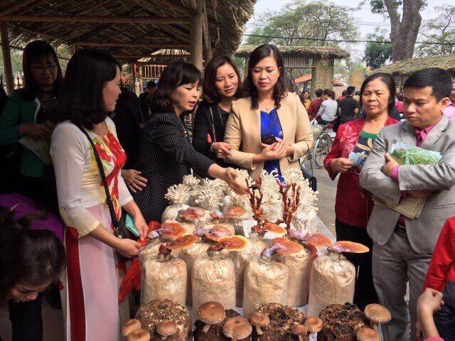 (anh Phú) Đông Anh: Tạo việc làm cho gần 200 lao động địa phương từ trồng nâm rơm bảo vệ môi trường - Ảnh 1.