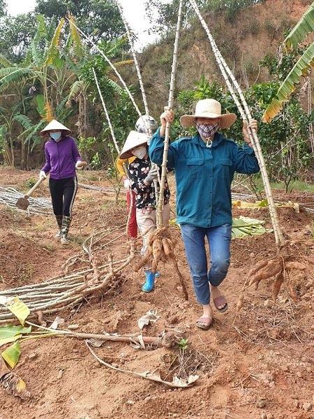 Sản xuất, sinh hoạt của người dân Sơn Lôi đã trở lại bình thường