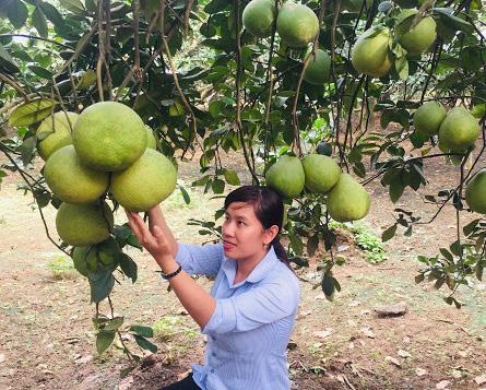 Phụ nữ Đồng Nai xây dựng nông thôn mới: Điểm nhấn từ '5 không 3 sạch'  - Ảnh 2.