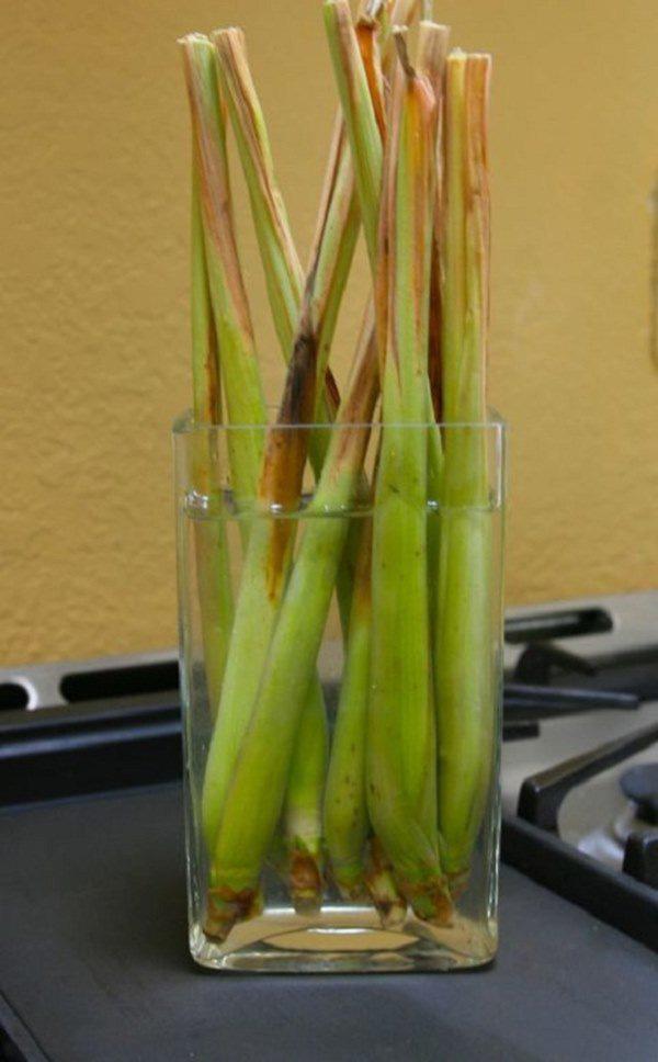 Những loại rau củ trồng từ gốc bỏ đi, lớn nhanh vùn vụt, cả năm ăn rau sạch chả hết - Ảnh 4.