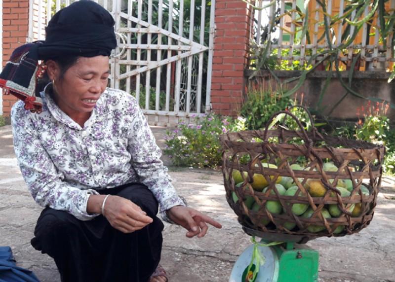 Từ lâu giống xoài tròn và xoài hôi của huyện Yên Châu tỉnh Sơn La đã được đem vào danh mục nguồn gien cây trồng quý hiếm cần bảo tồn và phát triển. Đây cũng là giống xoài bản địa duy nhất của miền Bắc Việt Nam đã được liệt kê trong danh mục của FAO cần được gìn giữ và phát triển.