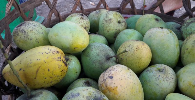 Khác với các giống xoài ở miền Nam, xoài Yên Châu trái tròn. Quả xoài thường nhỏ, 7- 8 quả mới đạt 1kg. Xoài Yên Châu khi chín có màu đỏ, cùi dầy và có hương thơm đậm đà.