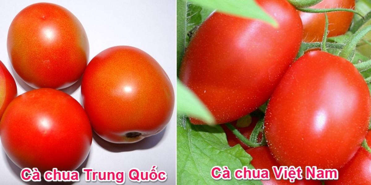 Hình dáng là cách phân biệt dễ nhận thấy nhất. Cà chua Việt Nam quả sẽ có hình thuôn nhỏ, hình bầu dục, hình tròn dẹt, quả méo mó, không tròn đều.  Cà chua Trung Quốc thường có hình tròn, quả đều nhau.