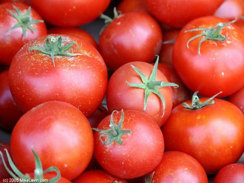 Khi chín, cà chua Việt Nam chín đều cả quả, mềm tự nhiên, nhiều bột, màu đỏ tự nhiên, đẹp mắt. Khi ăn dễ lột, bóc vỏ