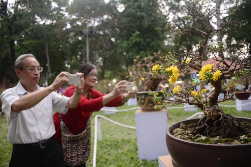 Nhiều du khách trầm trồ trước vẻ đẹp của những cây mai vàng được trưng bày tại hội hoa Xuân năm nay. Những cây mai ở đây có giá từ vài chục triệu đến khoảng 5 tỉ đồng.