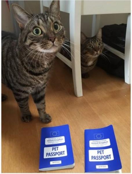 Những chú mèo với hộ chiếu EU giờ bị 'kẹt' bất đắc dĩ tại nước Anh.