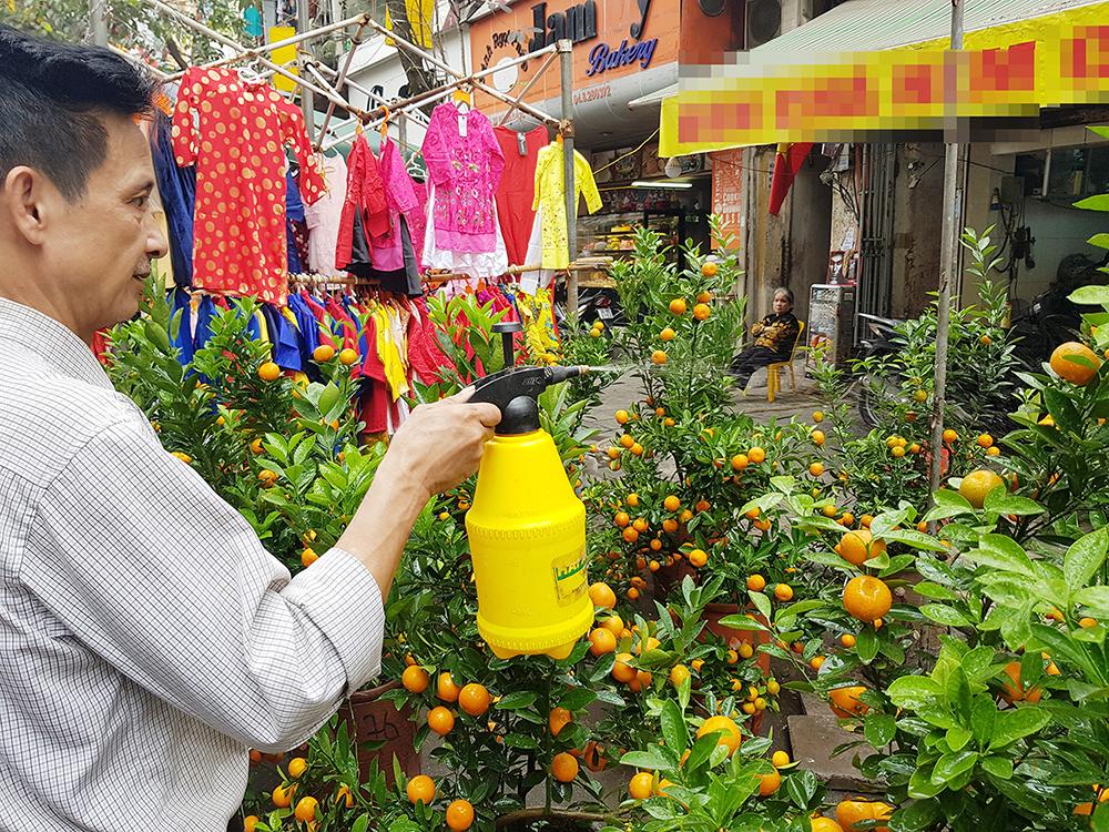 Một người bán hàng đang tưới nước cho các cây quất cảnh