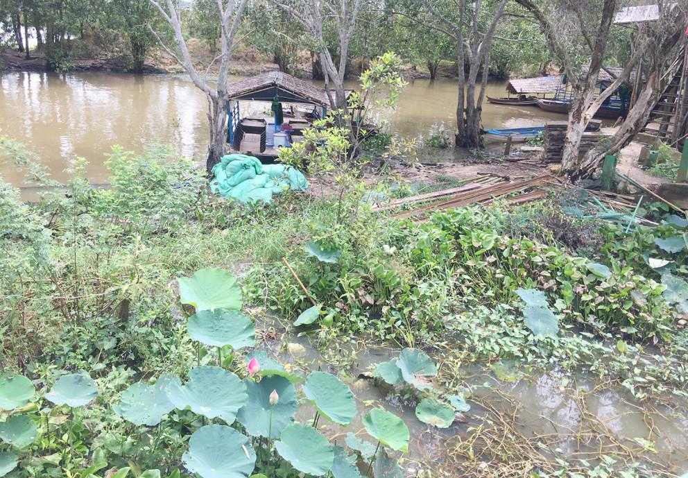 Về tới Tràm Chim huyện Tam Nông, sen hoang dã và thuần khiết giữa rừng ngập mặn.