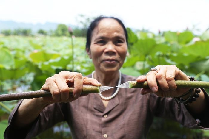 Người Việt Nam đầu tiên bắt sen nhả tơ để dệt thành khăn bán 10 triệu đồng/chiếc - Ảnh 5.
