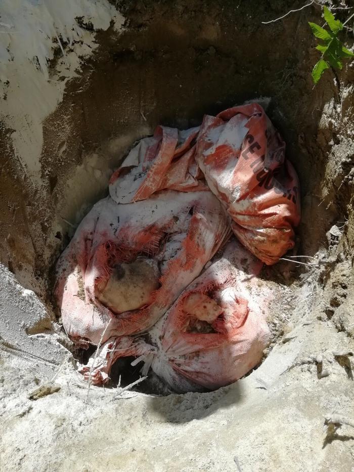 Tiêu hủy gần 70kg thịt lợn bốc mùi đang được bày bán tại chợ - Ảnh 1.