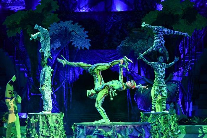 Tái hiện câu chuyện bảo vệ rừng xanh trên sân khấu xiếc - Ảnh 1.