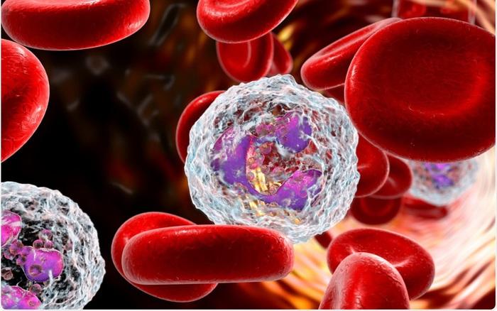 Leukocytes là gì? Tìm hiểu những bệnh có liên quan đến chỉ số leukocytes