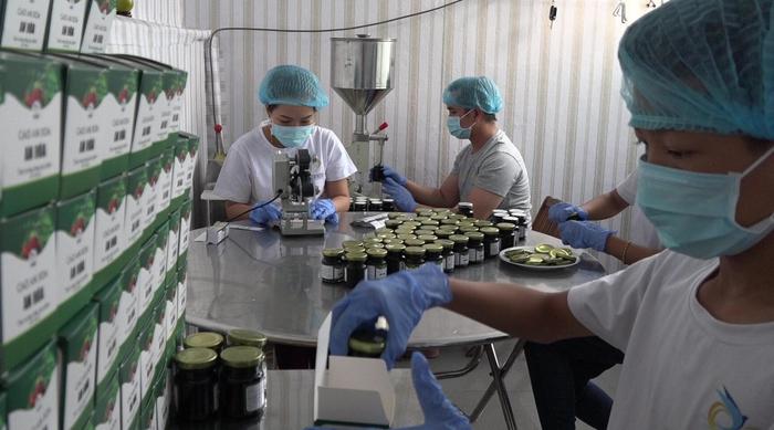 Ước mơ đưa cây an xoa thảo dược Việt Nam vươn tầm thế giới - Ảnh 2.