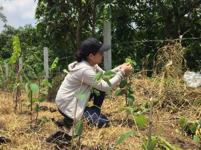 Ước mơ đưa cây an xoa thảo dược Việt Nam vươn tầm thế giới - Ảnh 1.