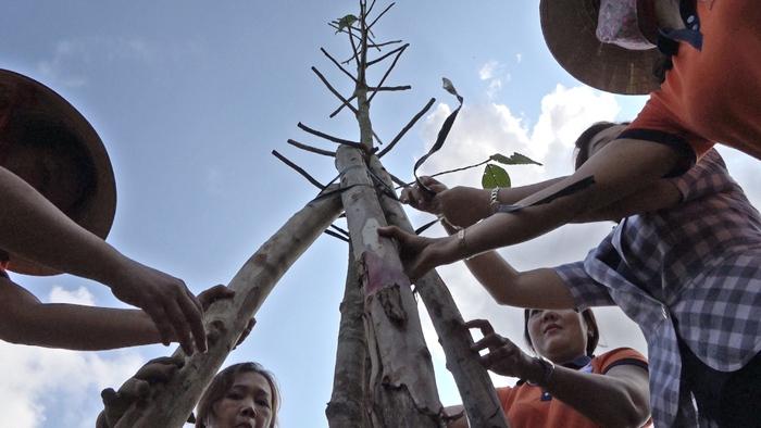 Trồng được một cây, môi trường thành phố Hồ Chí Minh thêm một nốt nhạc xanh - (Bà Nguyễn Thị Lan, Chủ tịch Hội LHPN quận Gò Vấp)