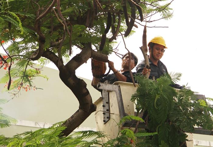 Chuyên gia cảnh báo việc chặt cây trong trường học - Ảnh 1.