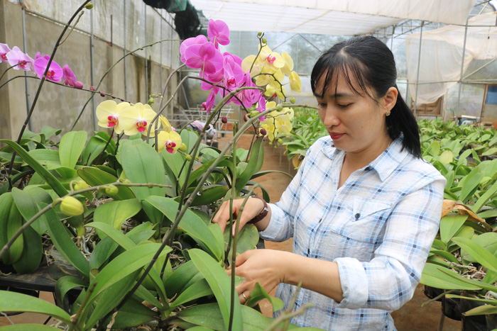 """""""Cú rẽ ngang"""" liều lĩnh từ nghề kế toán sang trồng hoa lan - Ảnh 1."""