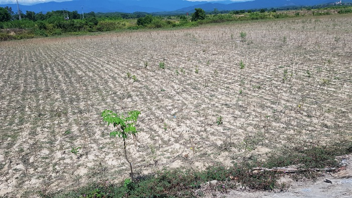 Cánh đồng chỉ còn lại đất trắng như hoang mạc tại xã Hà Linh.