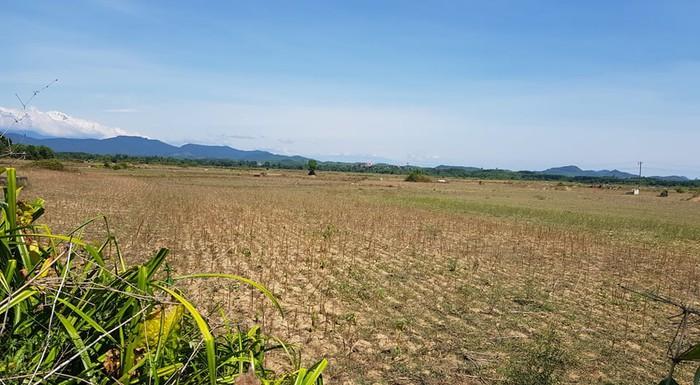 Cánh đồng này nằm ngay cạnh con sông Ngàn Sâu, nhưng vì nắng hạn không thể đủ nước để canh tác.