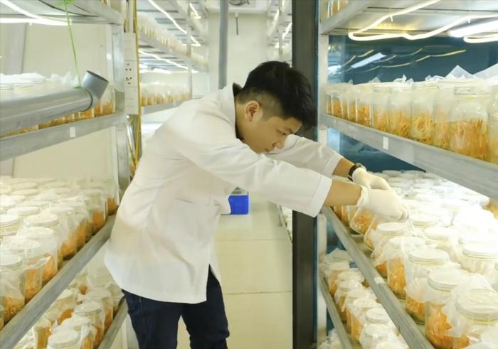 """Vượt qua cám dỗ, nuôi trồng thành công đông trùng hạ thảo """"made in Vietnam"""" - Ảnh 2."""