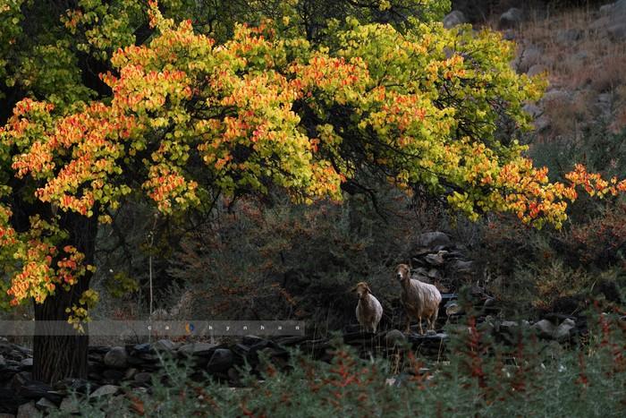 Ấn tượng khó quên với thiên đường mùa thu ở thung lũng Hunza  - Ảnh 1.