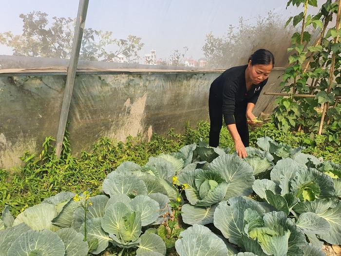 Người phụ nữ làm giàu từ nông nghiệp công nghệ cao - Ảnh 1.