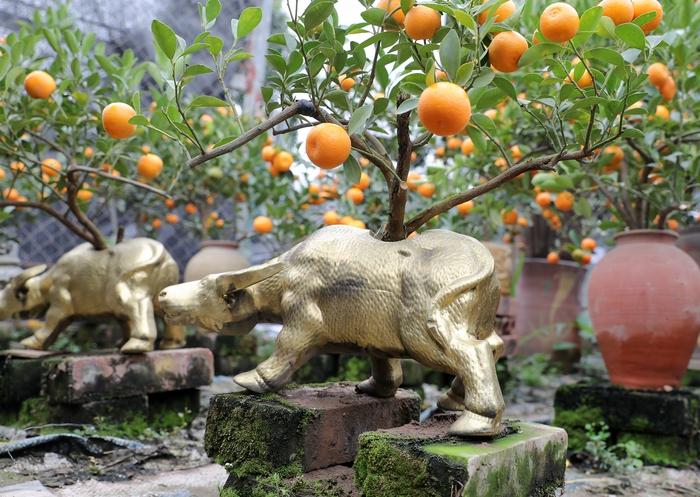 """""""Trâu cõng quất bonsai"""" giá tiền triệu vẫn hút khách - Ảnh 4."""