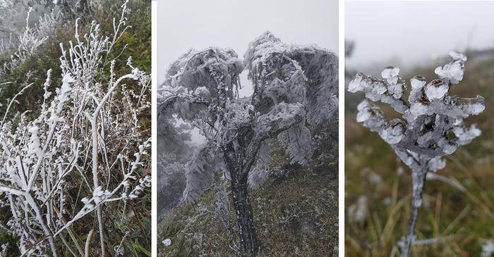 Trời rét đậm, rét hại, Mẫu Sơn -1,5 độ C xuất hiện băng giá ngày càng dày - Ảnh 7.