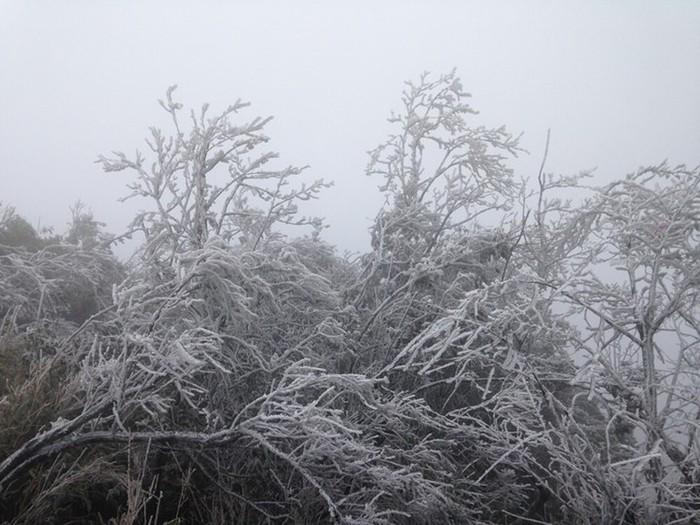 Trời rét đậm, rét hại, Mẫu Sơn -1,5 độ C xuất hiện băng giá ngày càng dày - Ảnh 2.