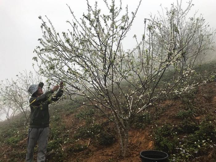 Mê mải với Xuân biên cương hồng rực đào phai và hoa mận trắng - Ảnh 2.