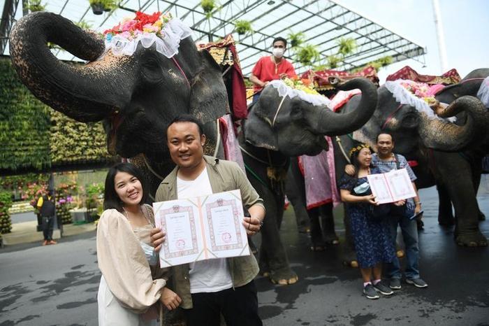 Đám cưới tập thể trên lưng voi ở Thái Lan nhân lễ Tình nhân - Ảnh 4.