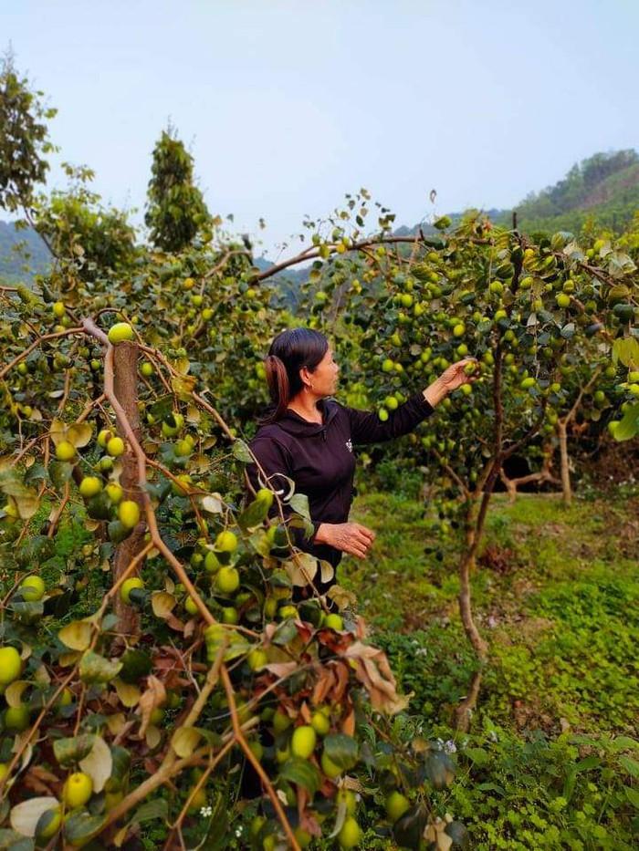 Từ giấc mơ đủ ăn đủ mặc trở thành bà chủ vườn cây ăn quả với thu nhập cao - Ảnh 1.
