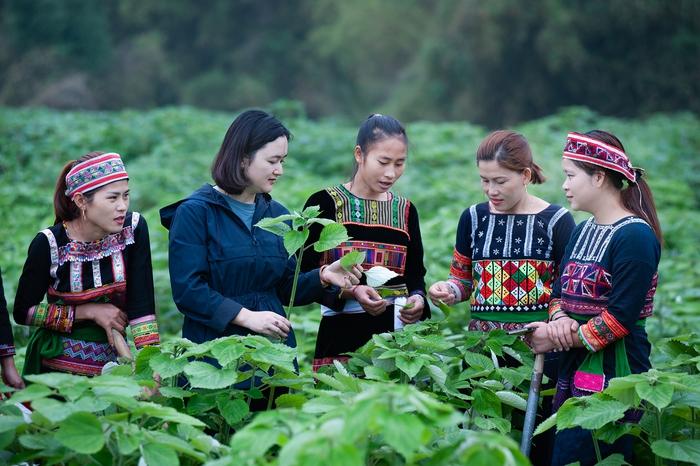 Đồng hành nâng cao quyền năng kinh tế cho phụ nữ dân tộc thiểu số  - Ảnh 2.