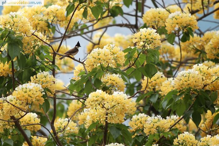Cây hoa Bún 300 tuổi tỏa hương khoe sắc giữa lòng Thủ đô - Ảnh 4.