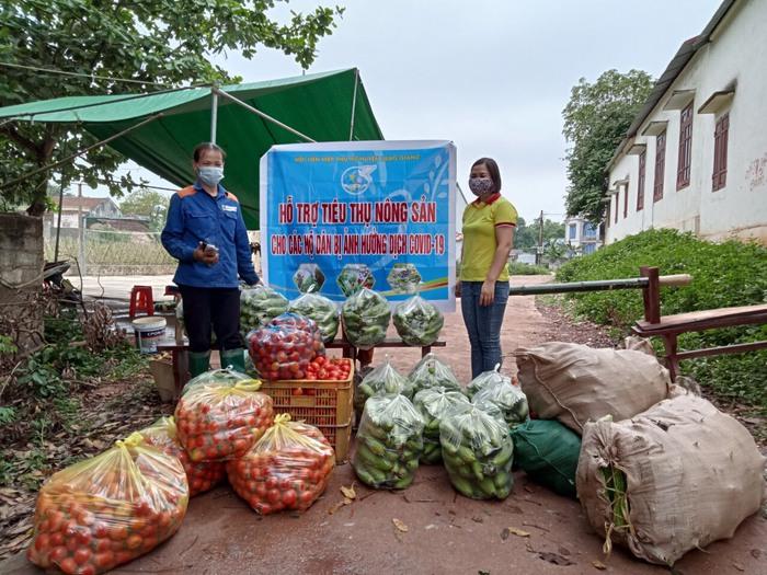 Bắc Giang: Giúp hội viên bị cách ly trồng dưa lê đến ngày xuống giống - Ảnh 1.