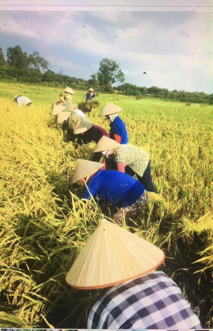 Bắc Giang: Giúp hội viên bị cách ly trồng dưa lê đến ngày xuống giống - Ảnh 2.