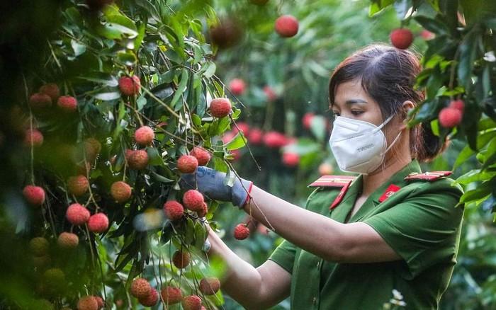 Phụ nữ Bắc Giang chung tay hỗ trợ người dân thu hoạch nông sản - Ảnh 1.