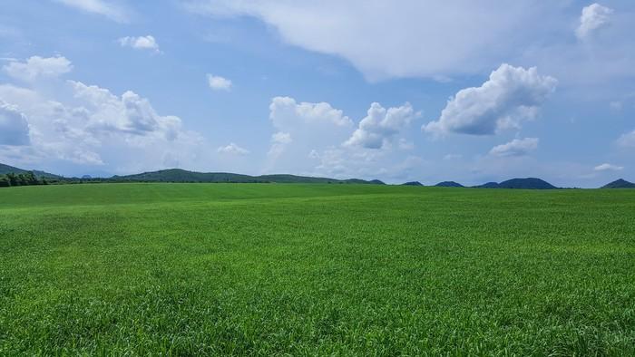 Lạc bước trên cánh đồng cỏ mombasa lớn nhất thế giới - Ảnh 1.