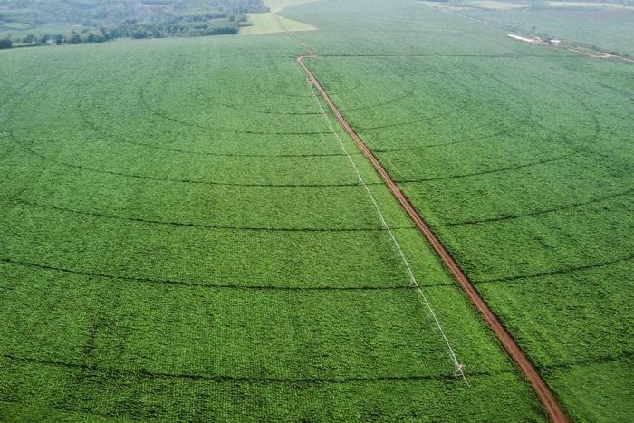 Lạc bước trên cánh đồng cỏ mombasa lớn nhất thế giới - Ảnh 7.