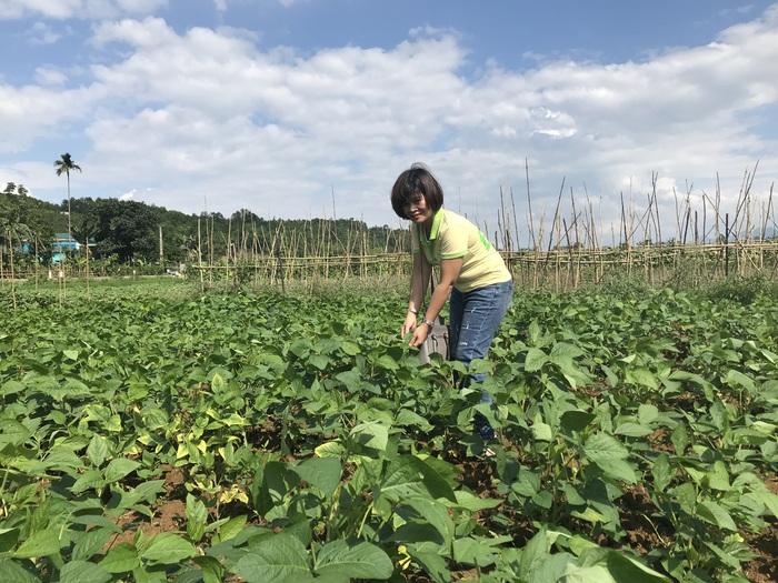 Khôi phục vùng trồng đậu tương không biến đổi gen, gây dựng thương hiệu Đậu phụ Quê Mình  - Ảnh 1.