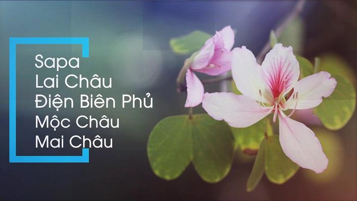 Đón xem livestream Mua tận gốc số 7: 6 ngày Tết dọc cung đường Tây Bắc cùng cô gái Thái Lò Kim Tuyến - Ảnh 2.