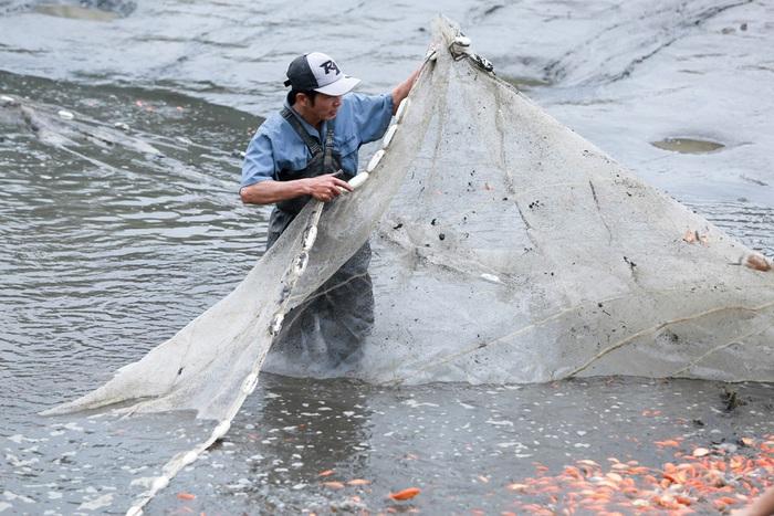 Càng đến gần ngày 23 tháng Chạp, hàng trăm hộ dân ở làng Thủy Trầm lại tất bật xuống rút nước ở ao để thu hoạch cá.