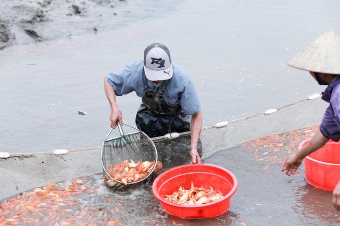 Ông Hà Công Vụ, trưởng khu 3, làng Thủy Trầm cho hay, để chuẩn bị lượng cá lớn phục vụ nhu cầu của người dân dịp Tết ông Công, ông Táo, ngay từ đầu năm, người dân trong xã phải chuẩn bị ao, ươm cá giống.