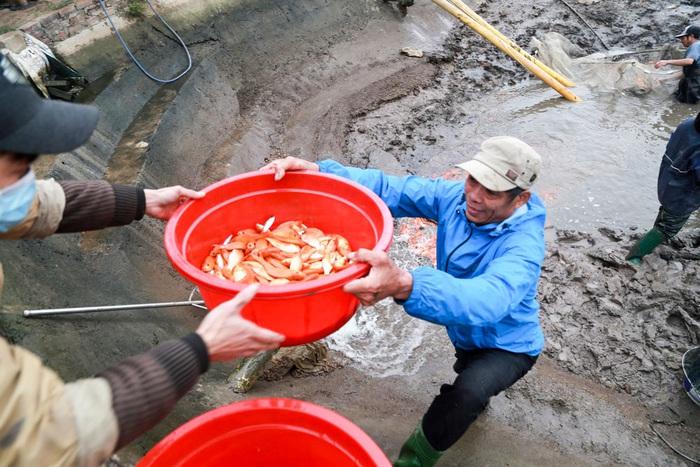 Hàng năm, cứ đến khoảng 20 – 21 (âm lịch) là làng Thủy Trần lại nhộn nhịp hẳn lên, xe tải vào ra tấp nập để chở cá, nhưng năm nay lượng mua giảm hơn năm ngoái, một phần có thể do người nuôi ở Thủy Trầm tăng hơn, mặt khác có thể nhiều người cá chép đỏ ở các tỉnh cũng nuôi thành công nên giá cũng có thể giảm hơn so với mọi năm.